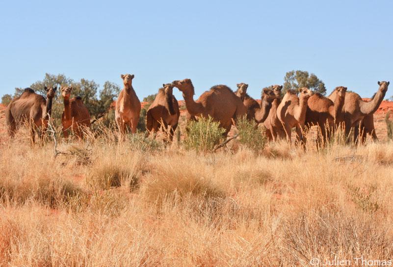 Comité d'accueil Australie