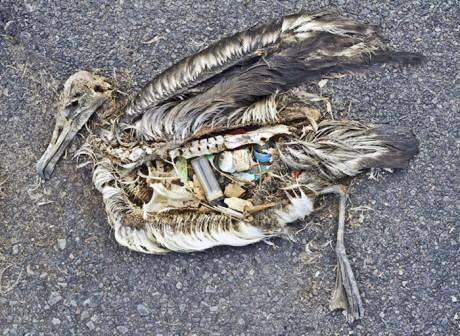Oiseau-mort-dechets